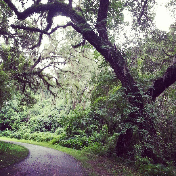 tom brown